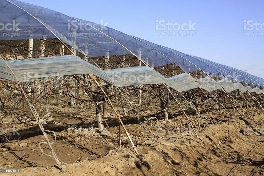 vegetable greenhouse royalty-free stock photo
