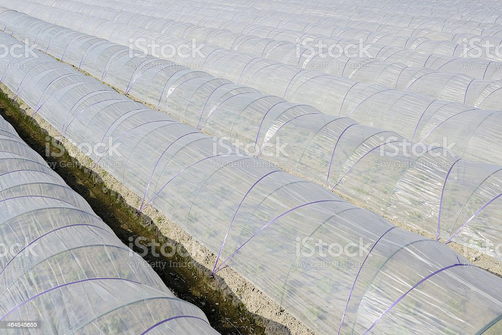 Vegetable greenhouse stock photo