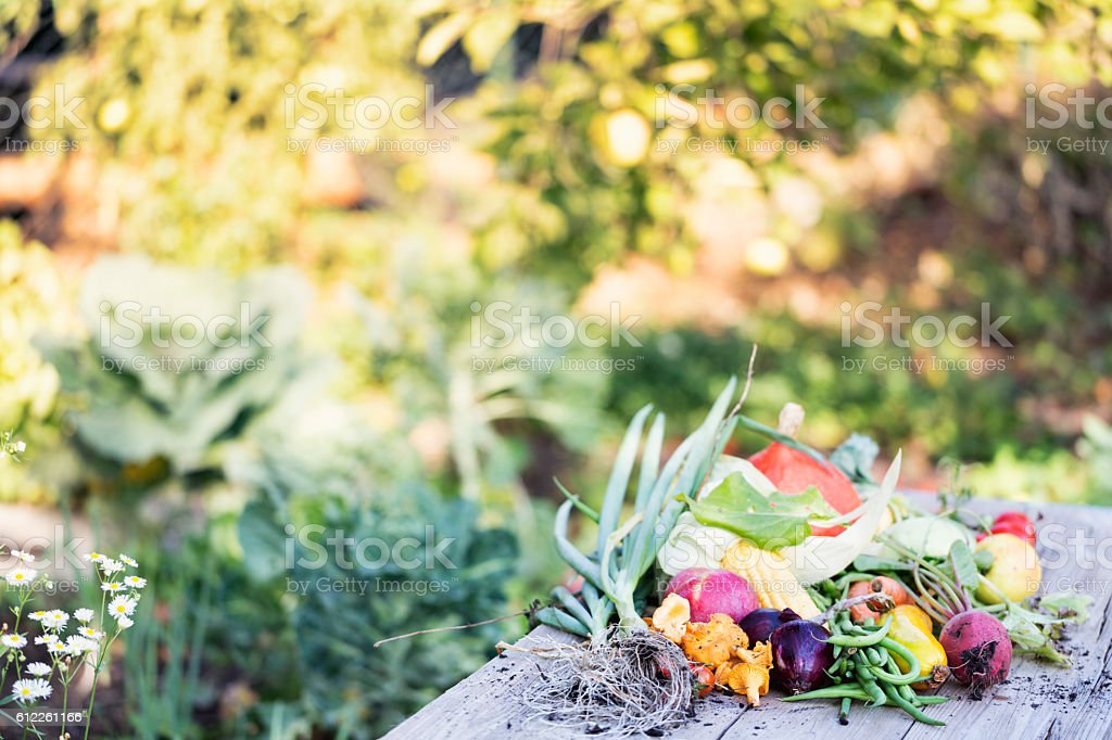 vegetable harvest freshness from garden stock photo