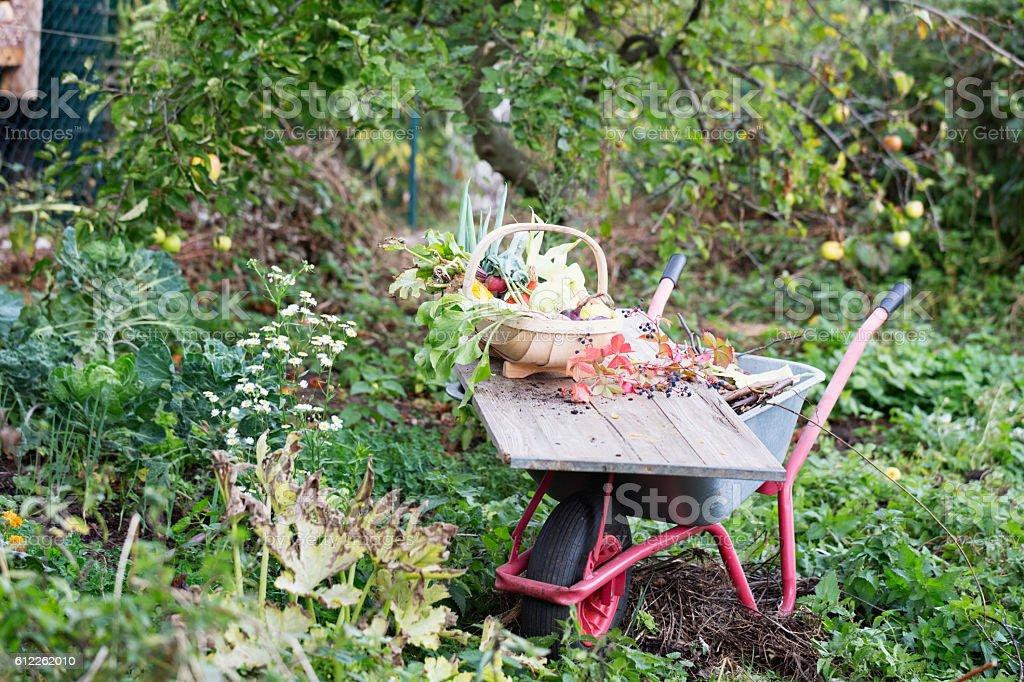 vegetable harvest freshness from garden stock photo