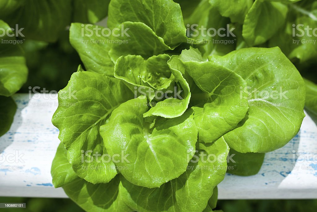 Vegetable house royalty-free stock photo
