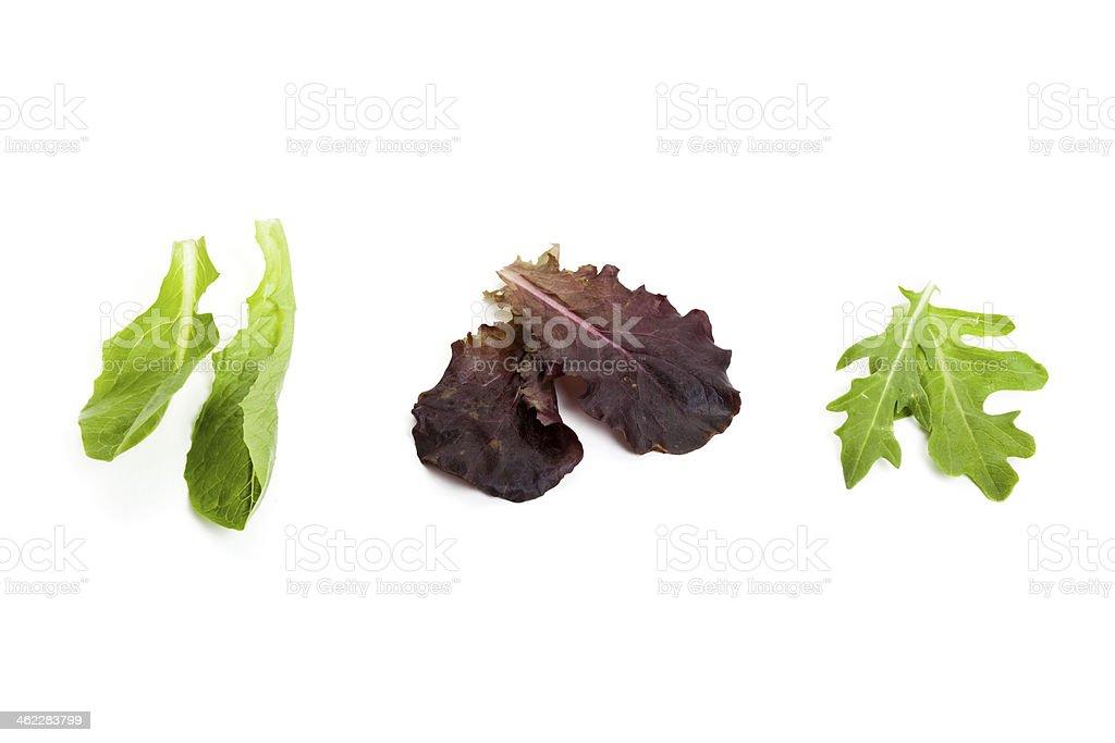 Vegetable leaf stock photo
