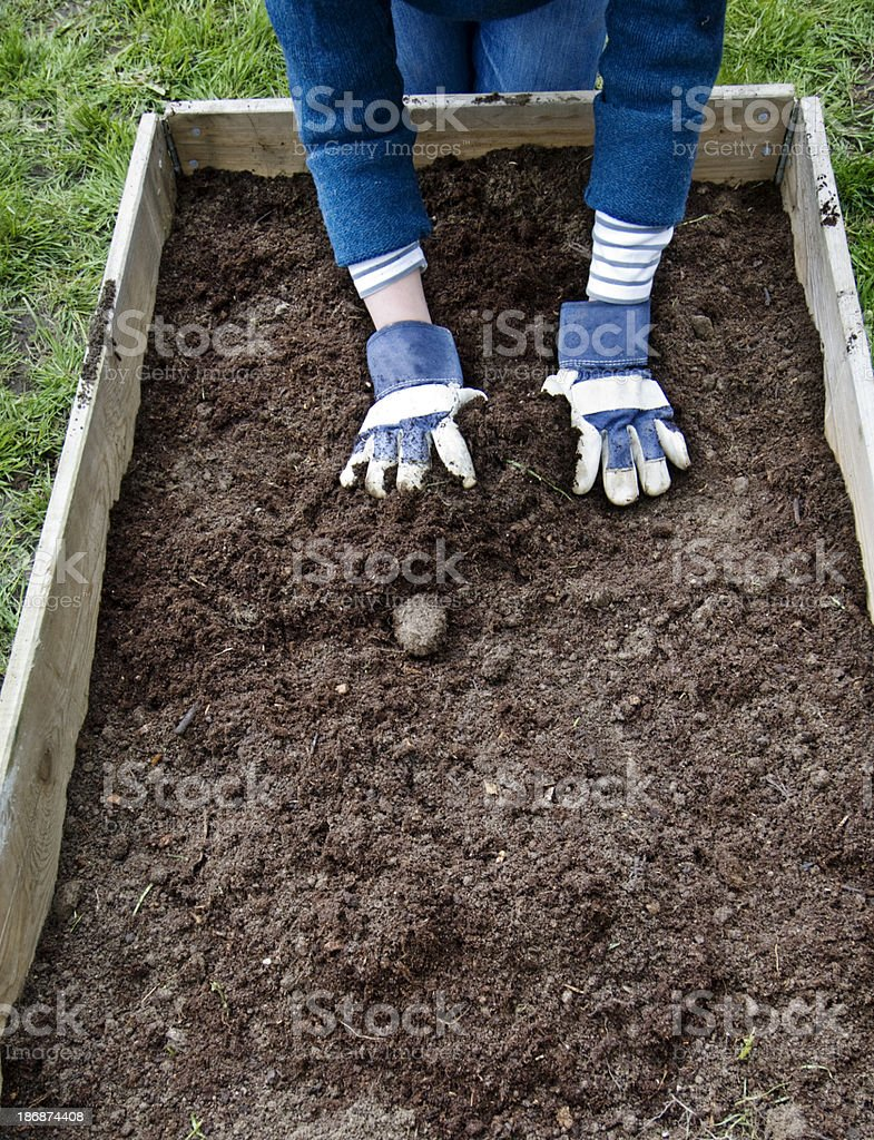 Vegetable Patch Preparation royalty-free stock photo