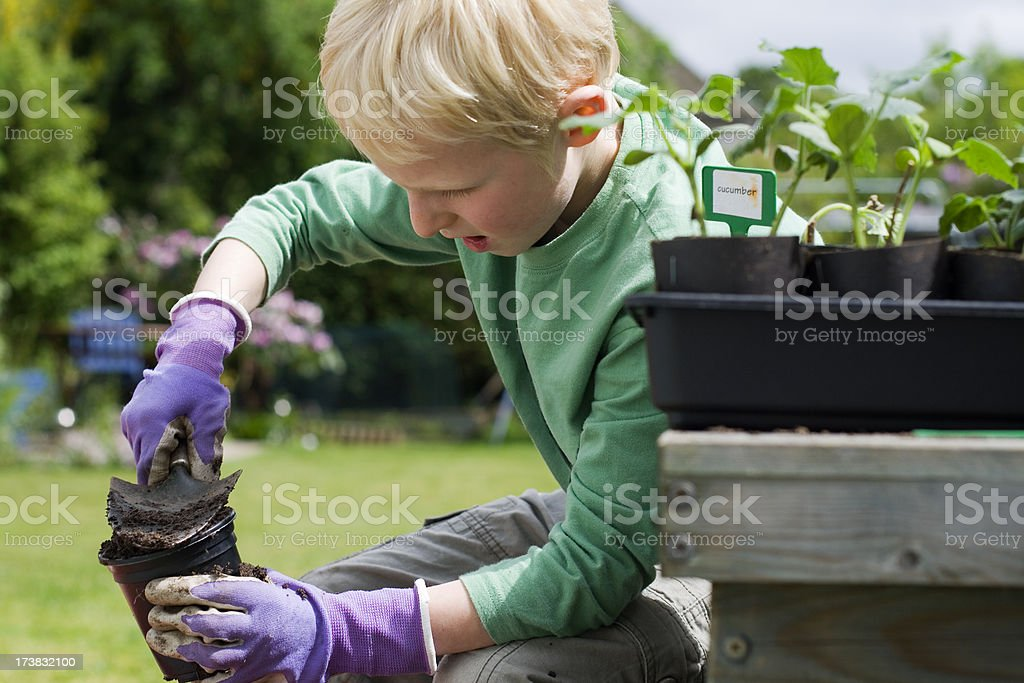 Vegetable planting royalty-free stock photo