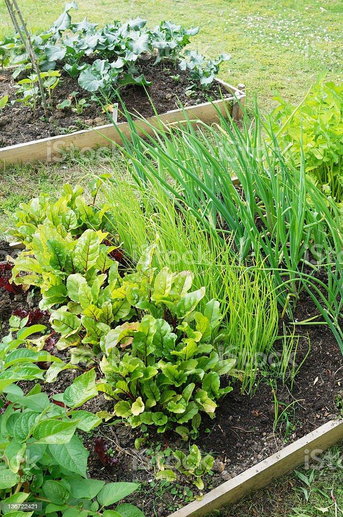 Vegetable Plot royalty-free stock photo