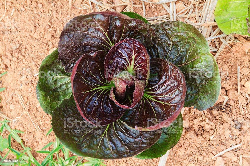 Vegetable salad. stock photo