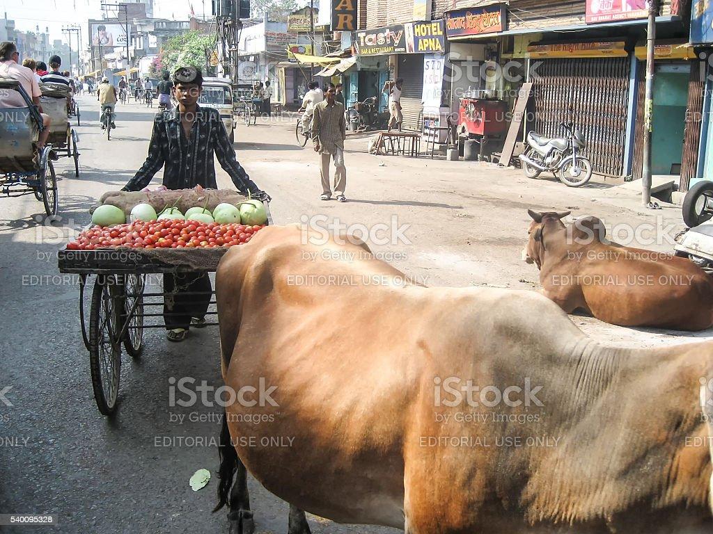 Vegetable seller with cart in Varanasi stock photo