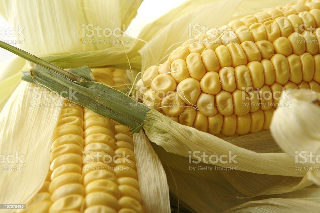 Vegetable Stills: Corn royalty-free stock photo