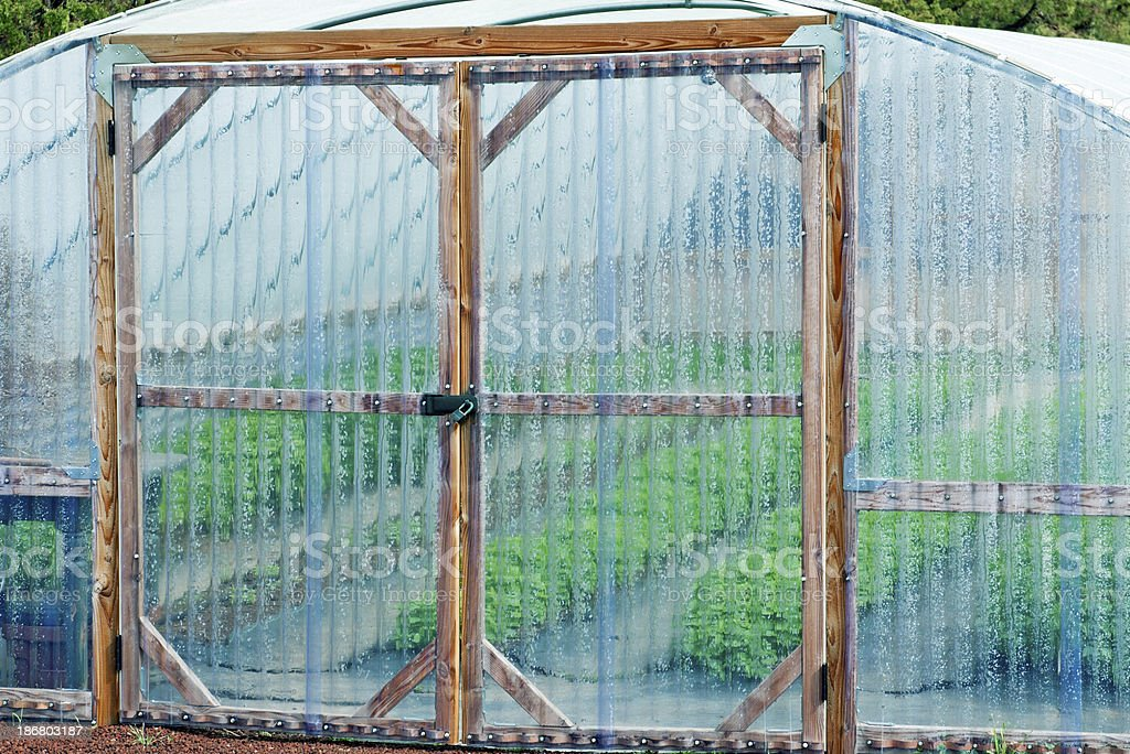 Vegetables and herbs growing in greenhouse royalty-free stock photo