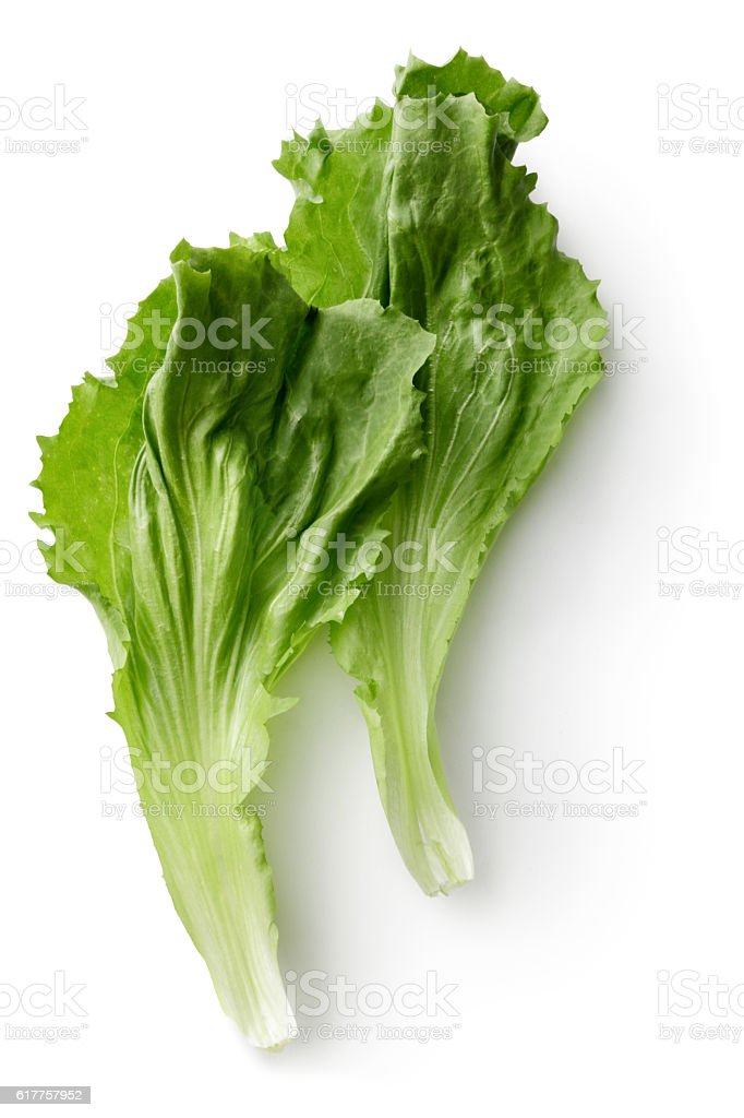Vegetables: Endive Isolated on White Background stock photo