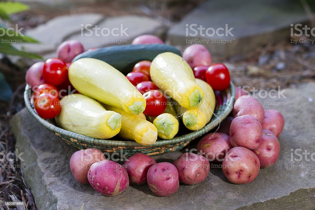 Vegetables fresh from the garden fill and surround a basket. stock photo