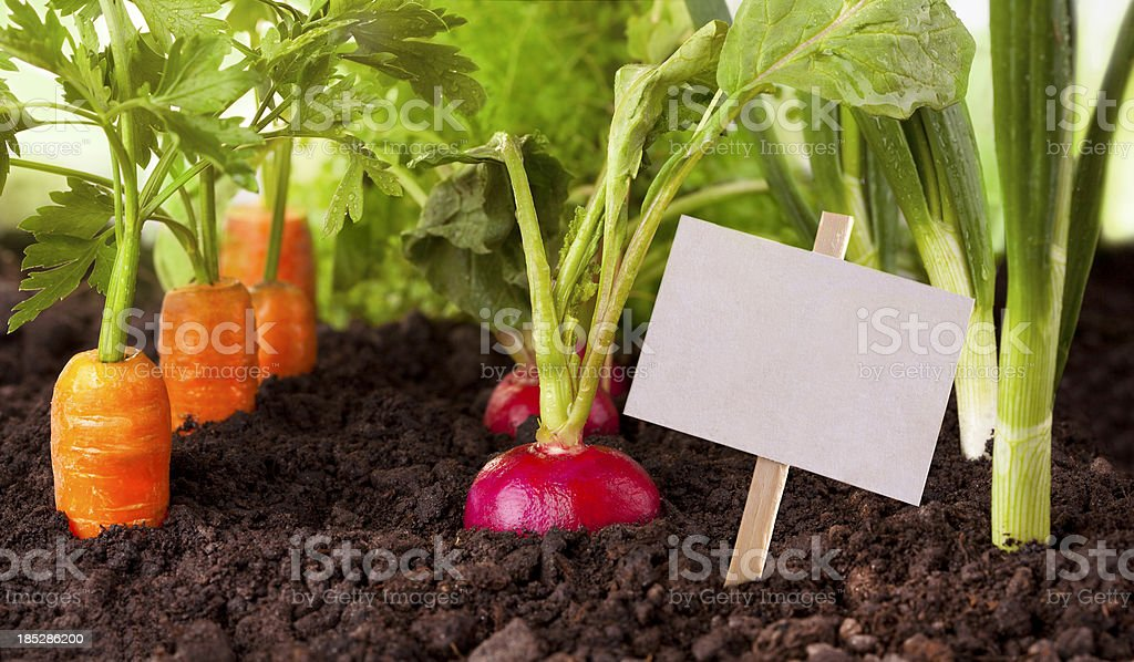 Vegetables garden royalty-free stock photo