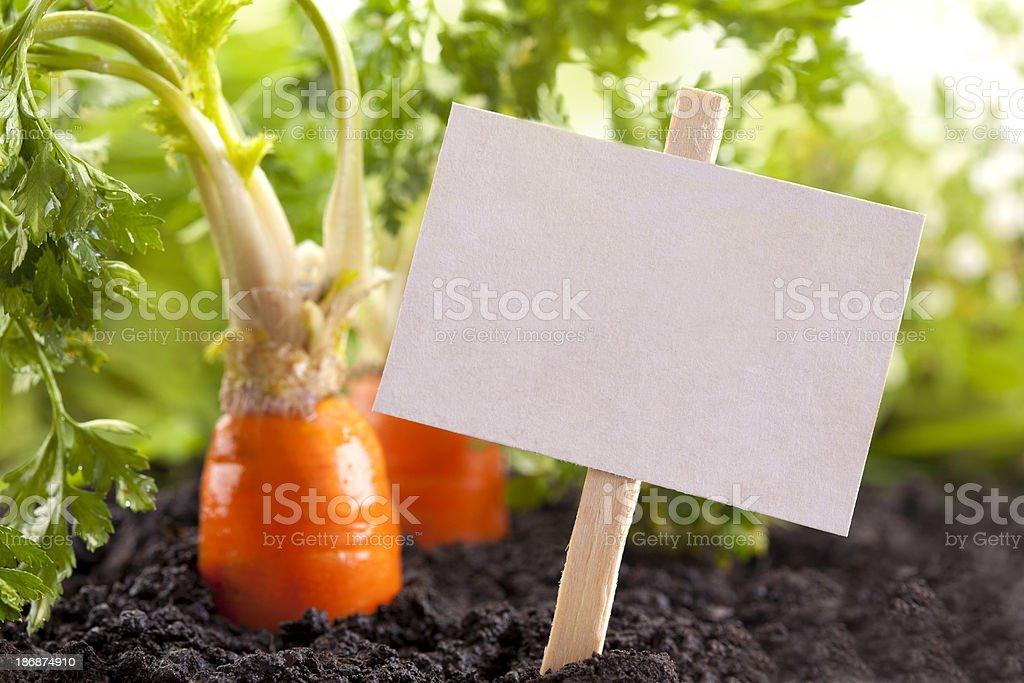 Vegetables garden royalty-free stock photo