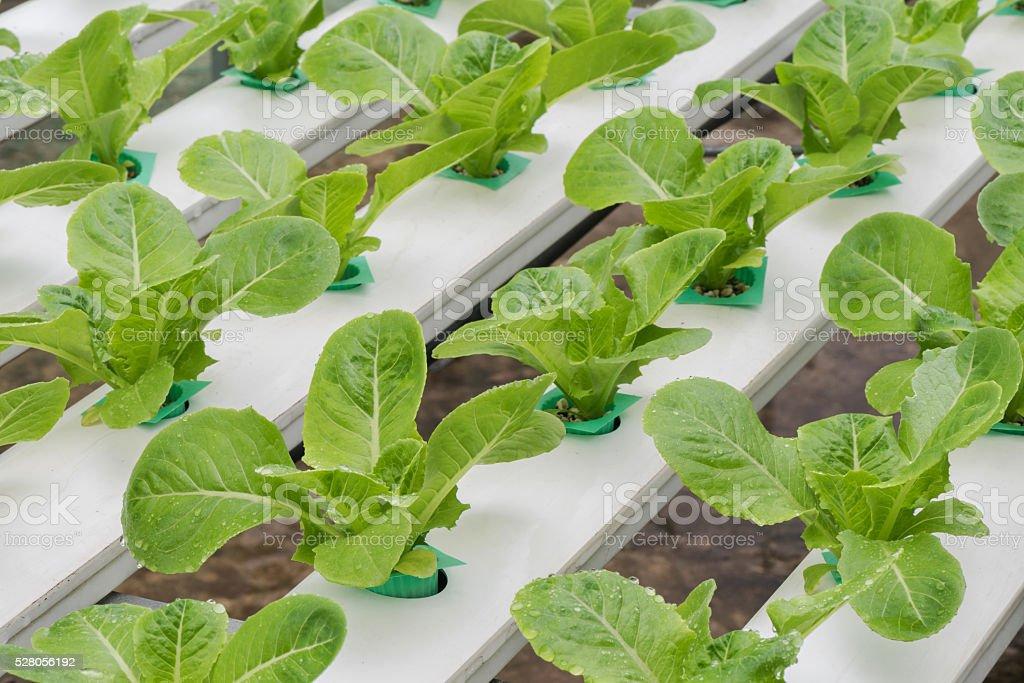 Vegetables hydroponic farm stock photo