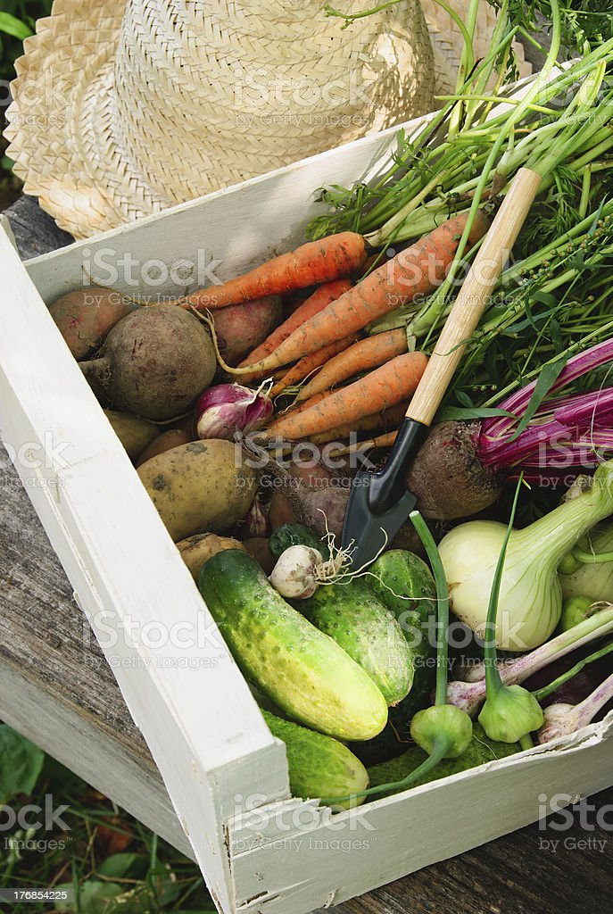 Vegetables in a white box royalty-free stock photo