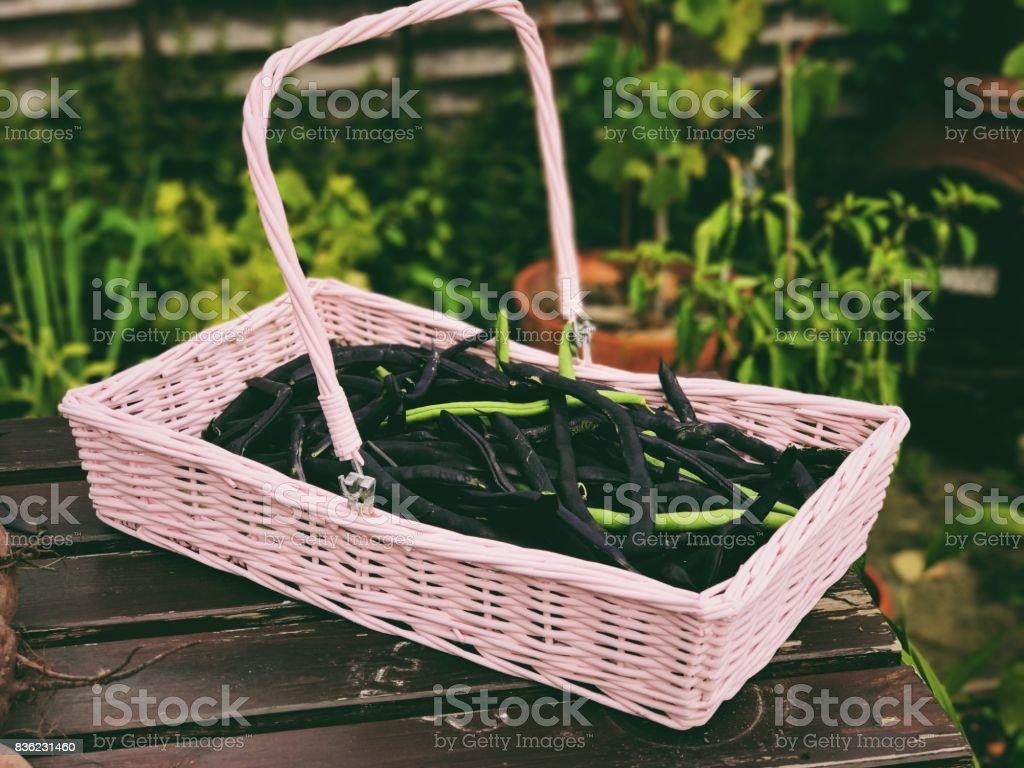 Vegetables in Garden stock photo