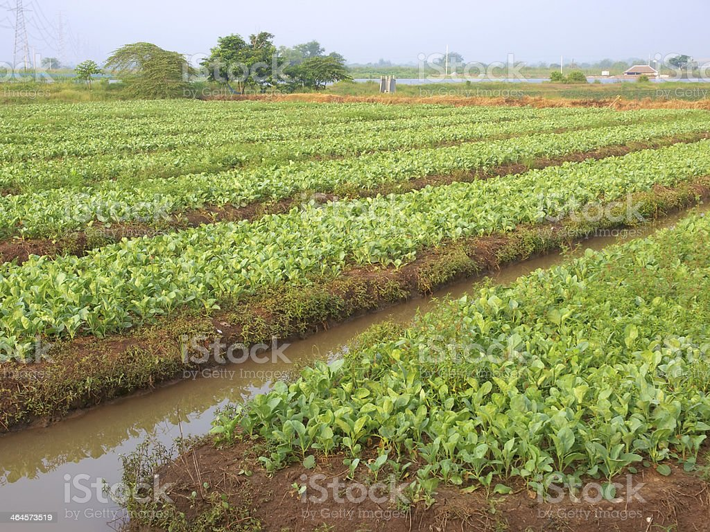 vegetables in nursery bed stock photo