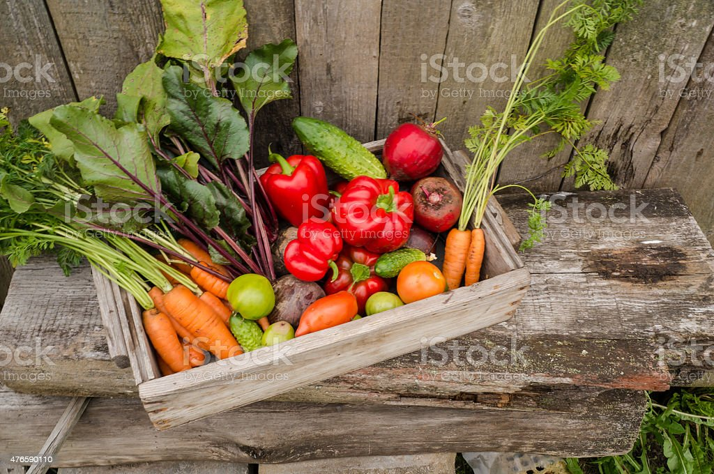 vegetables in the garden stock photo