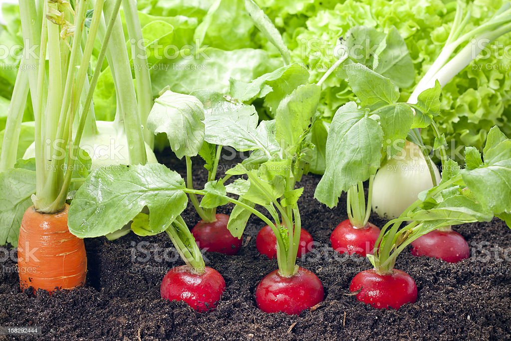 Vegetables mixed assortment in garden stock photo