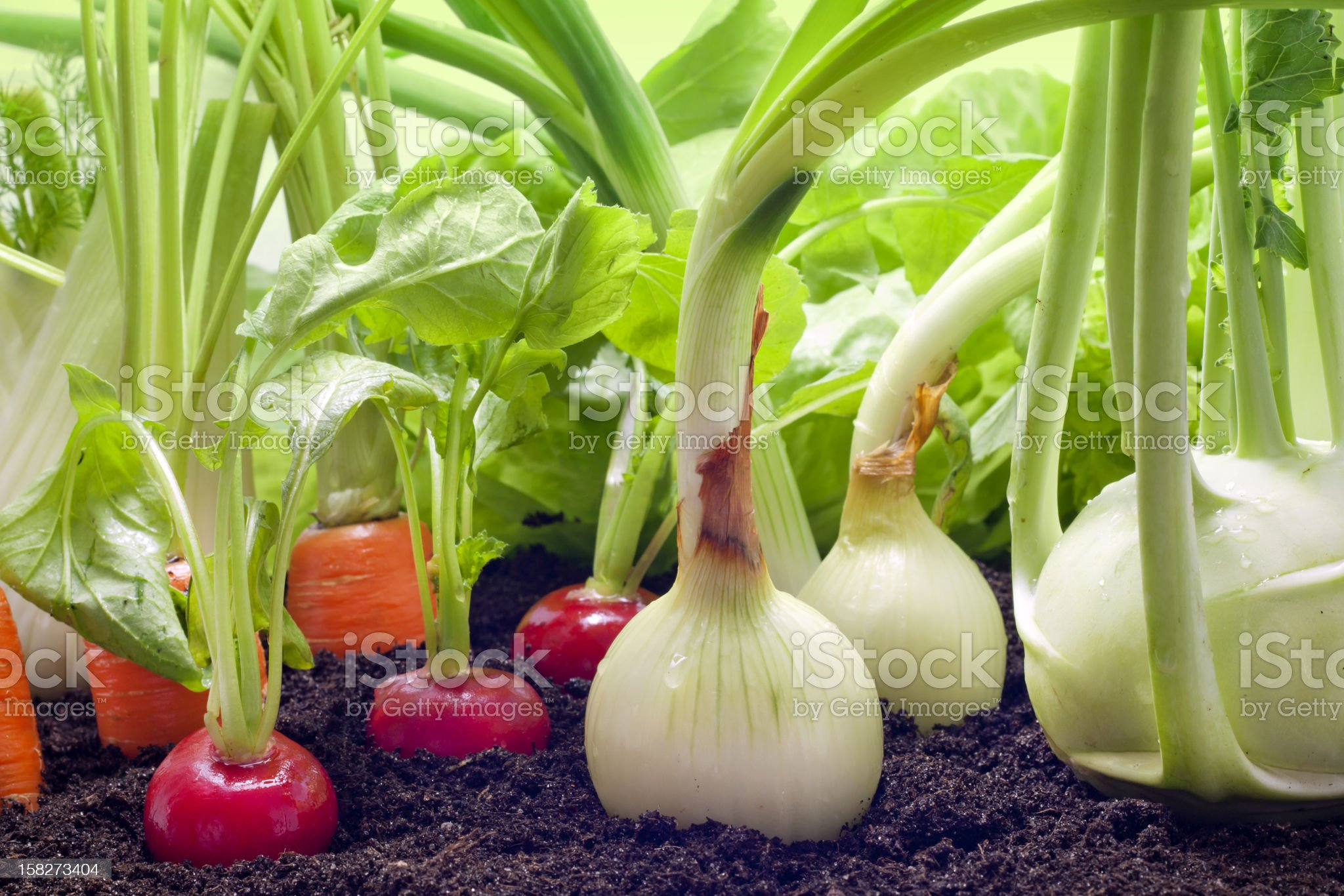 Vegetables mixed assortment in the garden royalty-free stock photo