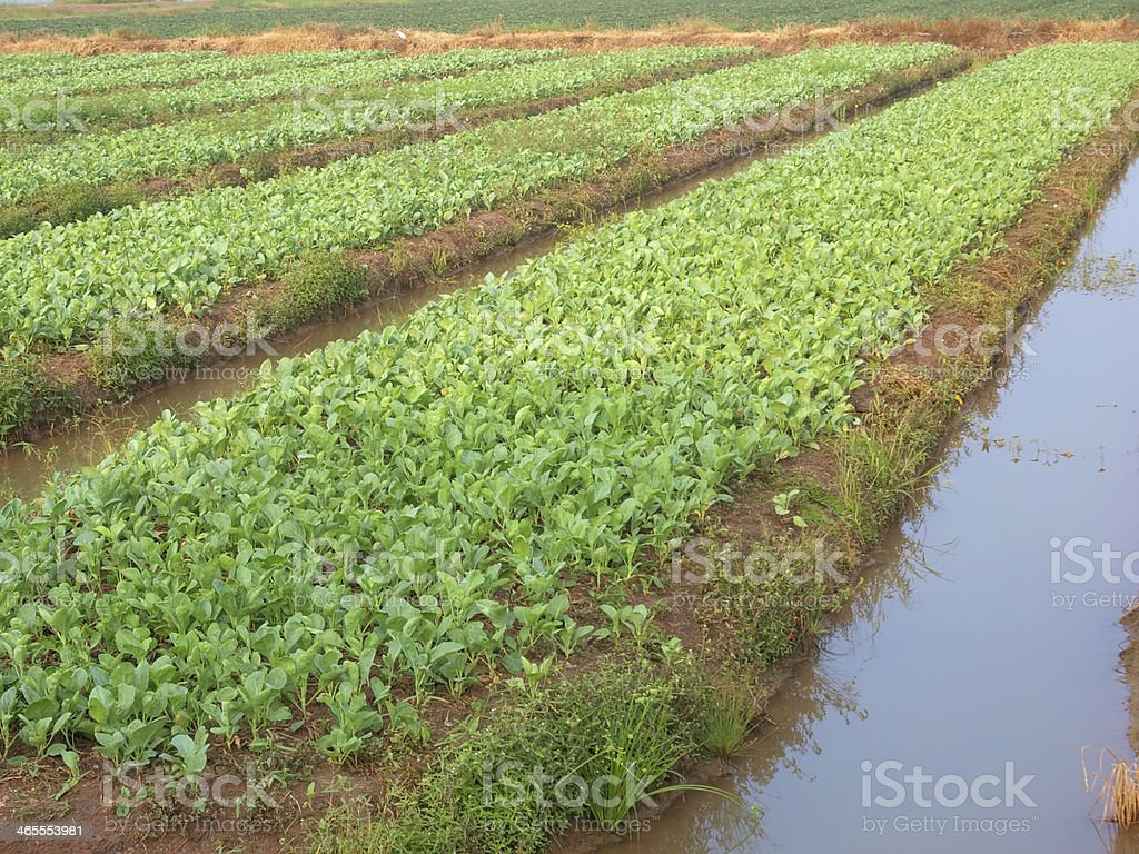 vegetables on bed royalty-free stock photo