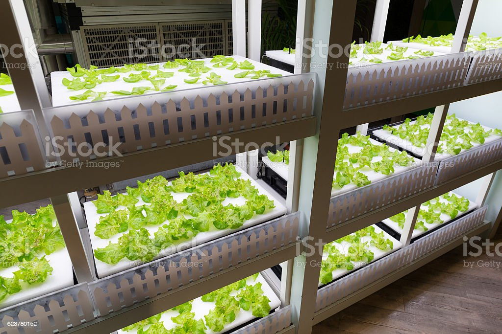 Vegetables planted in greenhouse stock photo