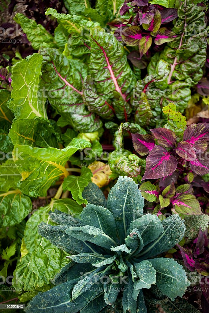 Vegetal background stock photo