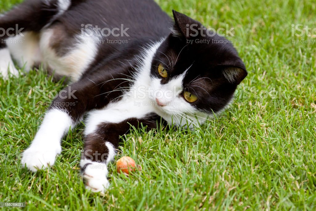 vegetarian cat stock photo