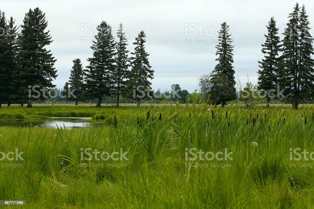 Vegetation and water from the swamps in Siberia stock photo