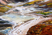 Vegetation in a geothermal field,Iceland