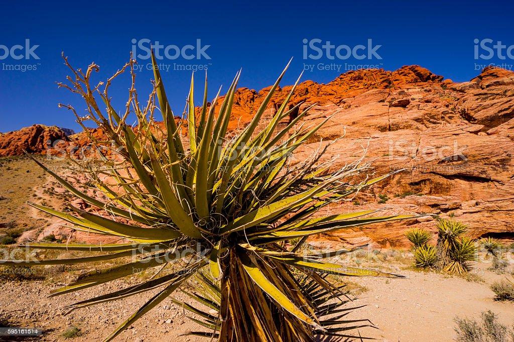 Vegetation in the Valley of Fire Lizenzfreies stock-foto