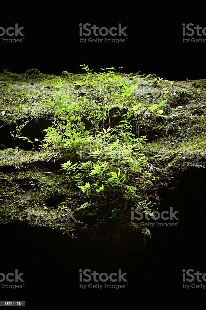 Vegetation on Rock stock photo
