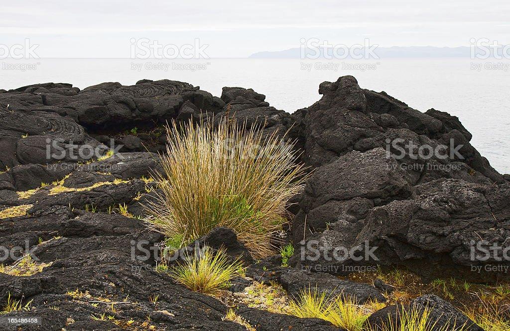 Vegetation on stones royalty-free stock photo