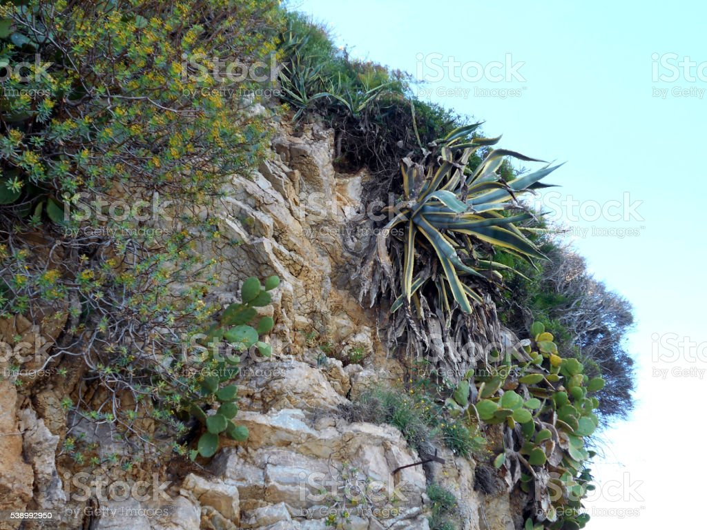 Vegetation on the cliff stock photo