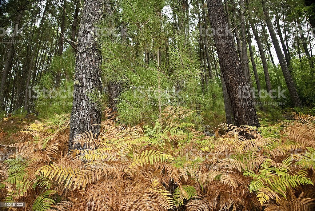 vegetation stock photo