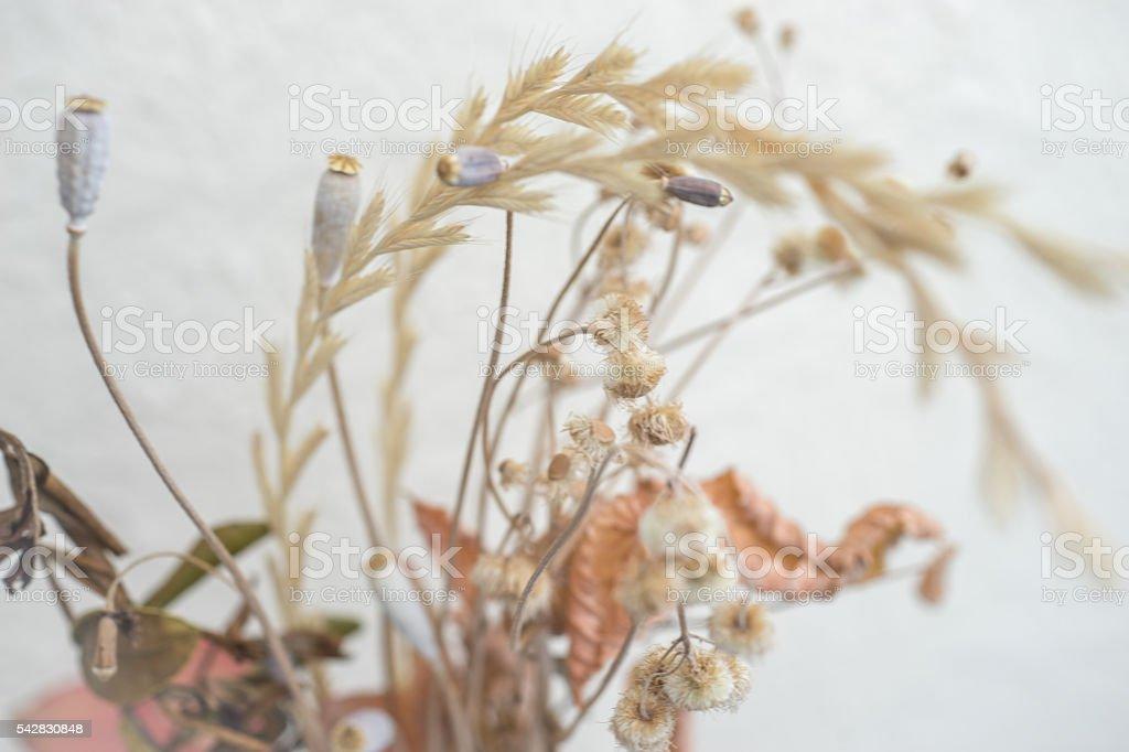 La végétation flétri photo libre de droits