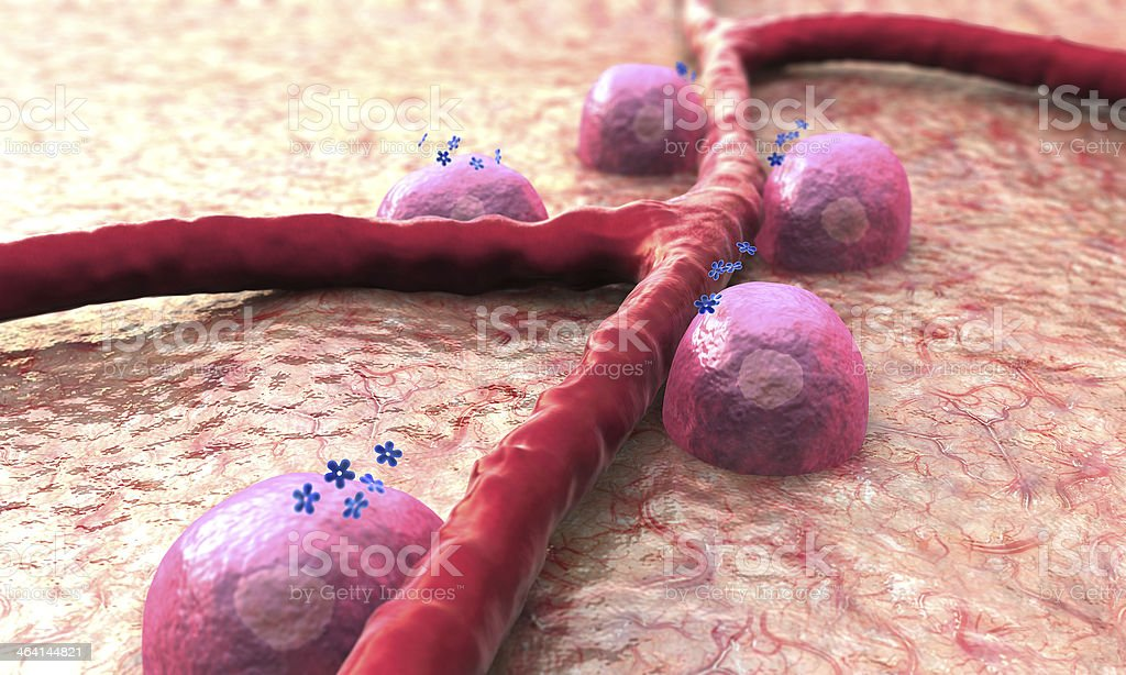 Vein, Beta cells, insulin royalty-free stock photo