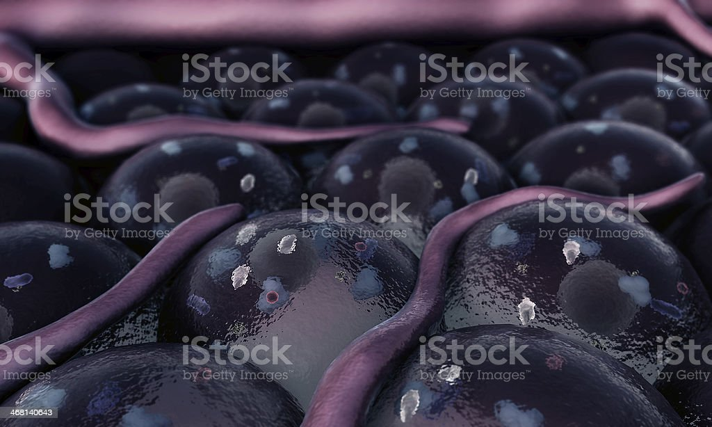 vein, cell, royalty-free stock photo