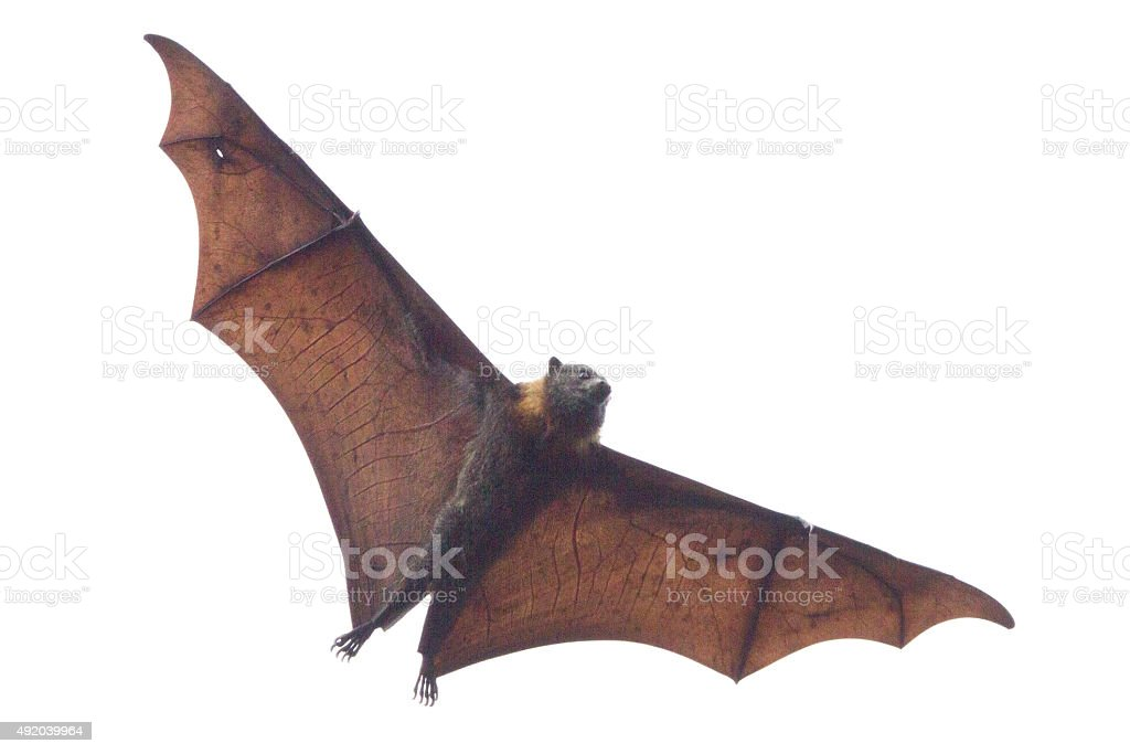 Veins in the Wings stock photo