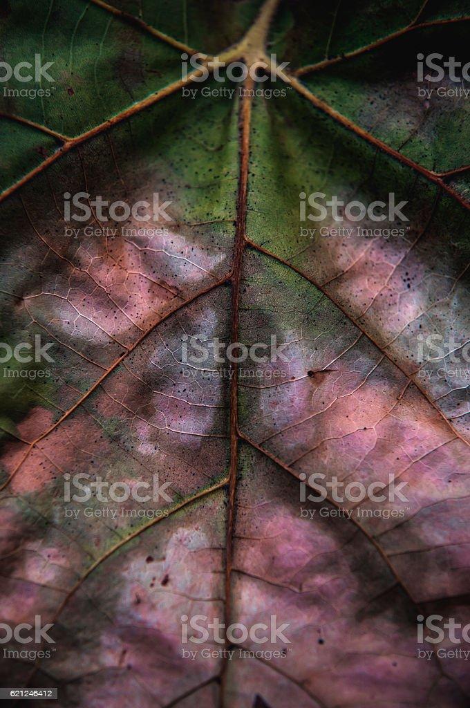 Veins of autumn stock photo