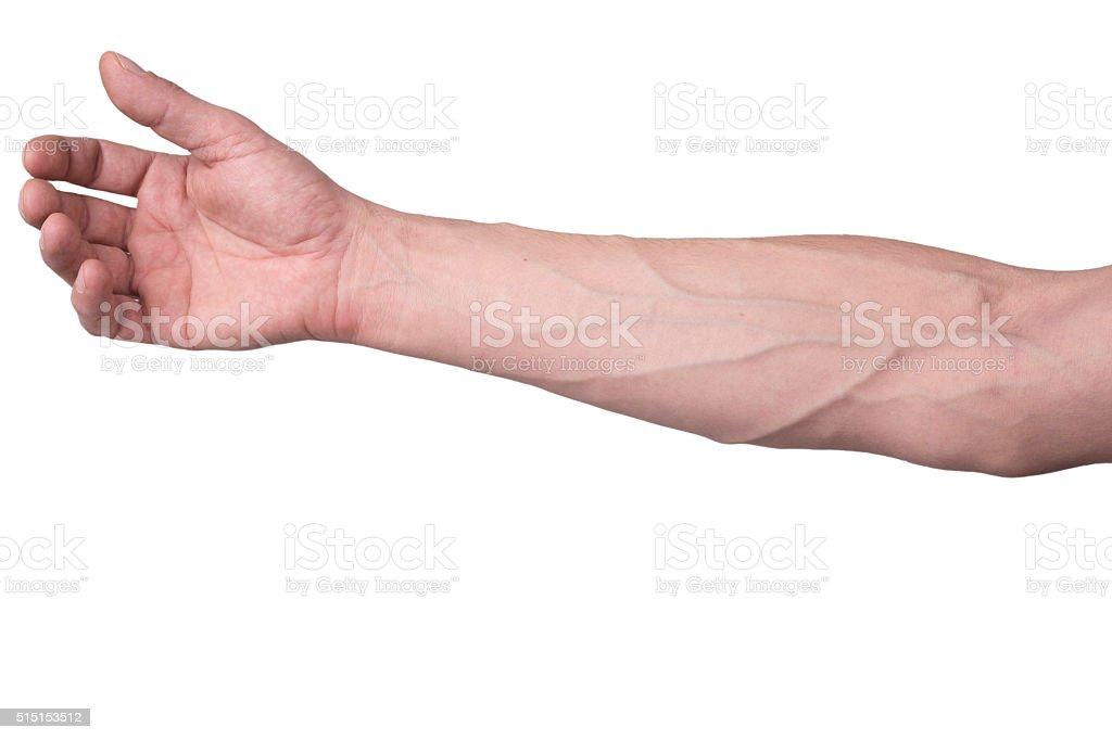 Veins on an arm stock photo