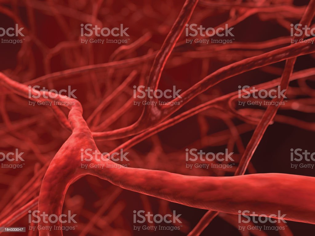 Veins stock photo