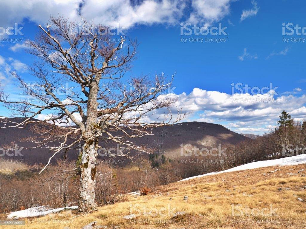 Velebit mountain scenery stock photo