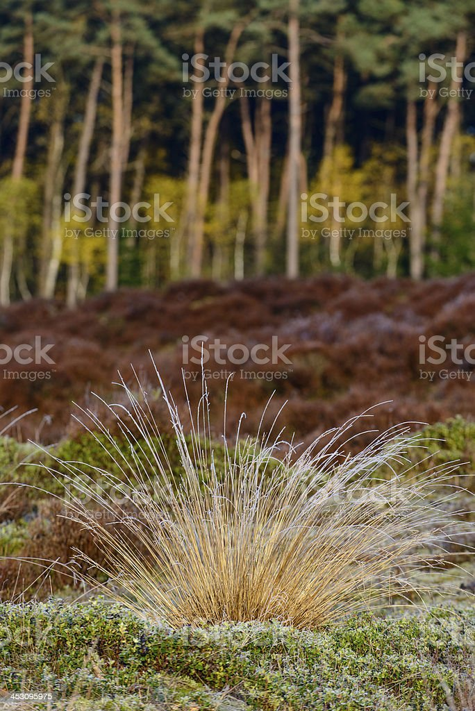 Veluwe plants royalty-free stock photo