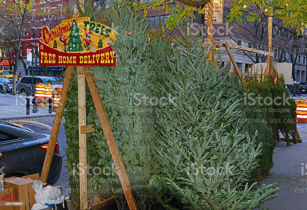 Vendors selling Christmas Trees on the streets of Manhattan. stock photo