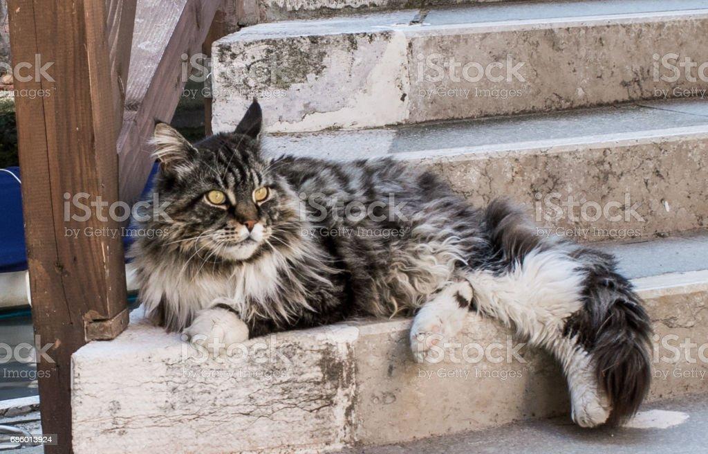 Venetian cat stock photo