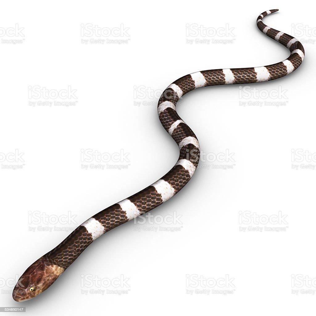 Venomous snake stock photo