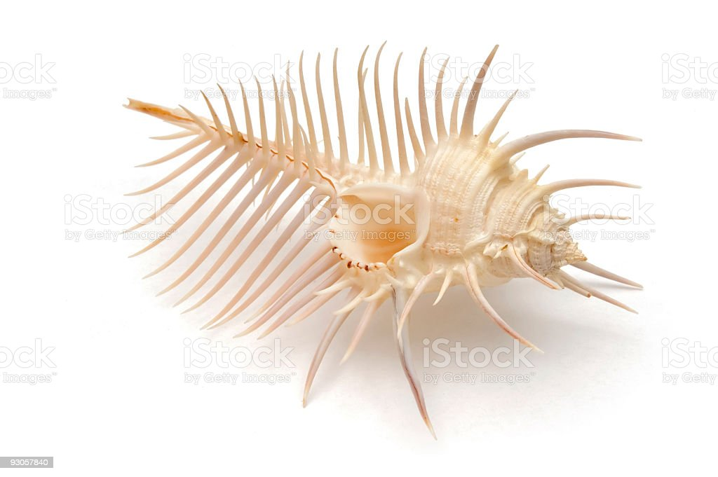 Venus Comb (with clipping path) stock photo
