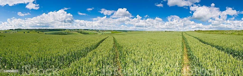 Verdant field crops big sky panorama royalty-free stock photo