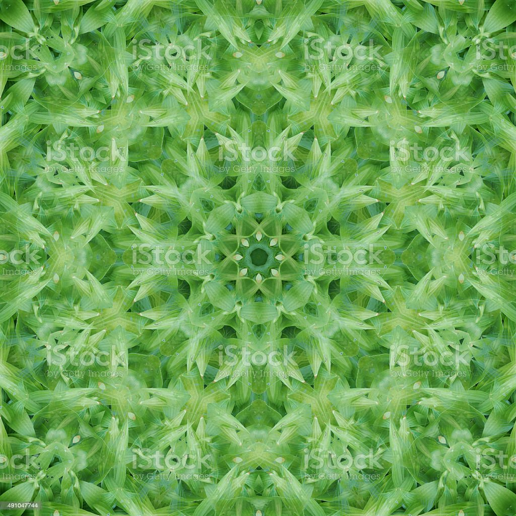 Verdant Mandala stock photo